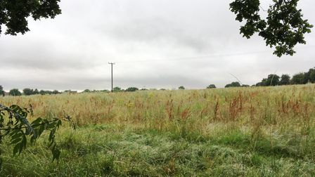 The field off Barrow Hill in Acton which is earmarked for a 100-home development