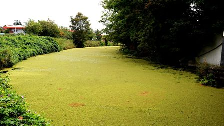 Pollution from farming can cause algae to build up and choke waterways. Picture: ARCHANT LIBRARY