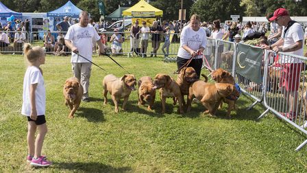 Essex dog day saw thousands attend. Picture: ADRIAN BIGGS