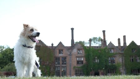 Olly enjoyed a break at Seckford Hall. Picture: LATE ROOMS