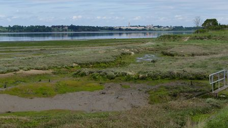 Land at Wrabness that Essex Wildlife Trust hopes to buy. Picture: ANDREW IMPEY/EWT