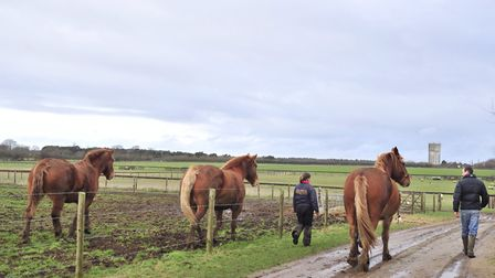 The Suffolk Punch Trust Trail will be transformed for Halloween. Picture: LUCY TAYLOR