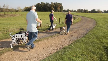 Dog walkers on the Paws with a Cause walk at Glemham Hall. Picture: NIGE BROWN
