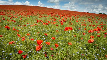The winner of the Living the View category of the Landscape Photographer of the Year Awards, Poppies