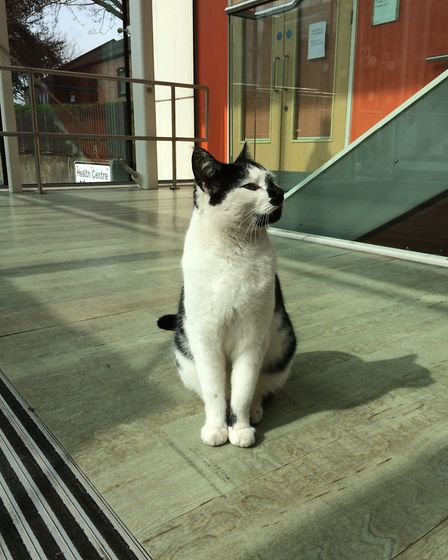 The University of Essex campus cat Pebbles has become a friendly presence on campus. Picture: VANESS