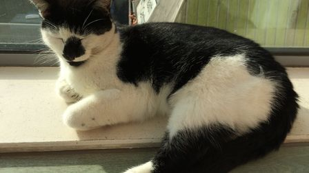 Pebbles enjoys a warm window sill at the University of Essex. Picture: VANESSA NOLAN