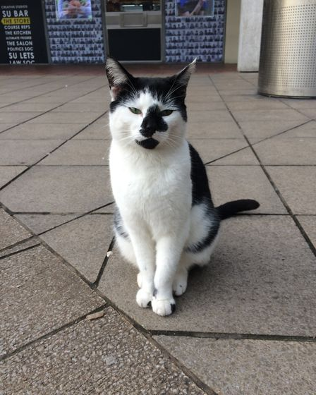 Pebbles regularly wanders the University of Essex campus to make new friends. Picture: VANESSA NOLAN
