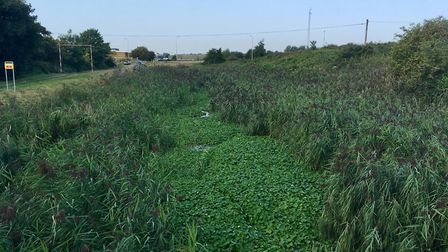 Dock River, Parkeston, before Environment Agency staffed cleared it of pennywort. Picture: ENVIRONME