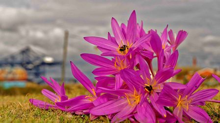 Philip J Hill's winning photo of wild flowers growing on the challenging and often dry landscape of