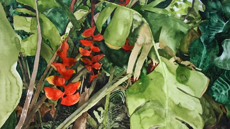 Heliconias 2 - watercolour on paper 50 x 70cm 2015. Picture: JELLY GREEN