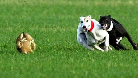 Stock image of hare coursing. Picture: ARCHANT