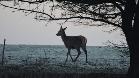 Stock image of a deer. Picture: ANDREW MUTIMER