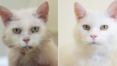 Rosie the rescue cat before and after her transformation. Picture: LIZ PITMAN/ RSPCA
