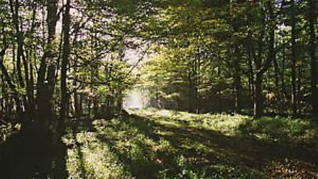 A woodland grant scheme opens for applications in January 2018. Picture: NATURAL ENGLAND