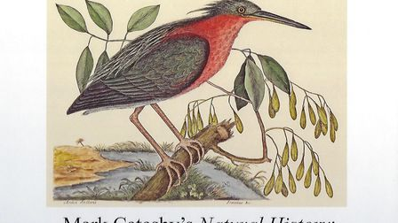 An illustration from Mark Catesby's book
