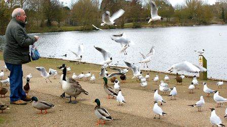 Needham Lakes is a good place to see the rail line. Picture: iWitness