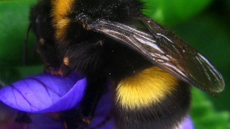 A total ban on bee-harming pesticides being used across Europe will be supported by the UK, environm