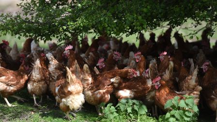 Poultry owners are being urged to be on the alert after bird flu cases discovered in Italy, Germany