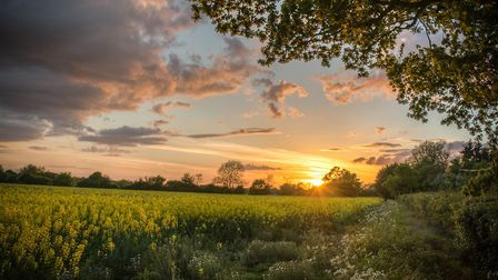 Summer Gold. Picture: SHERIE BRINKLEY
