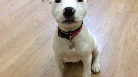 Could you help give Otis a fresh start?