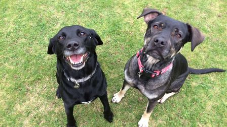 Could you give these fabulous friends Pip and Molly a home together?