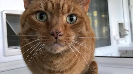 Could you give Garfield a new home?
