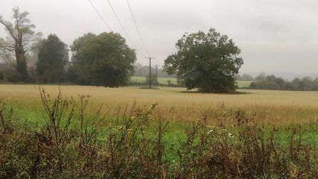 Land between Elm Lane and Back Lane in Copdock where Babergh suggests homes could be built. Picture