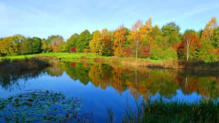 Autumn colours at Polstead. Picture: PETER CUTTS