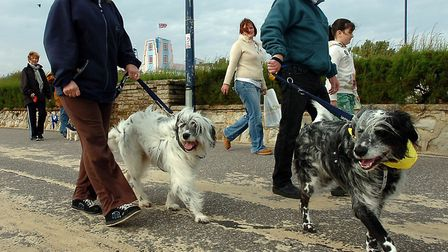 Dog walkers taking part in a Blue Cross charity event on Felixstowe prom - owners are hoping they co