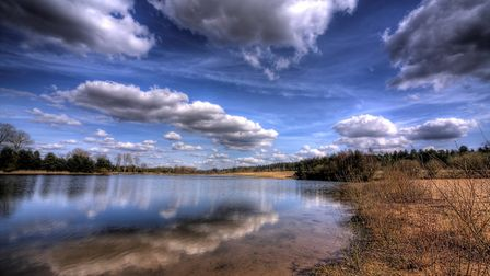 A wetland scene at Lynford in the Brecks. Picture: NICK FORD