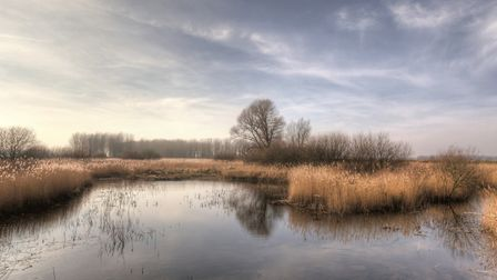 A view across part of the RSPB's Lakenheath Fen nature reserve on the edge of the Brecks. Picture: N