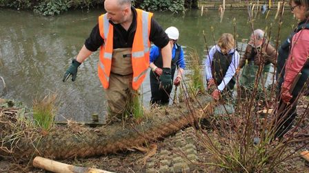 Members of the Bury Water Meadows group working in the River Lark in the Abbey Gardens, in Bury St E