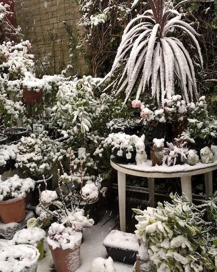 Snowy scenes from Ipswich. Picture: Contributed