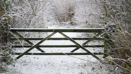 Combs Wood. Picture: Kevin Button