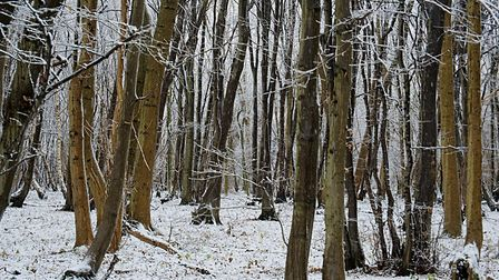Combs Wood winter wonderland. Picture: Kevin Button