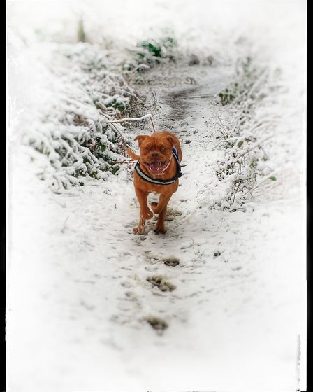Bailey enjoying the snow in Broomhill Park. Picture: Rob Watson