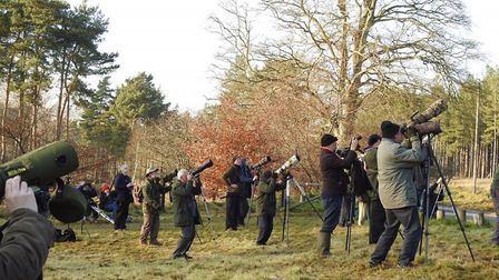 Bird watchers catch a glimpse of a rare visitors to East Anglia