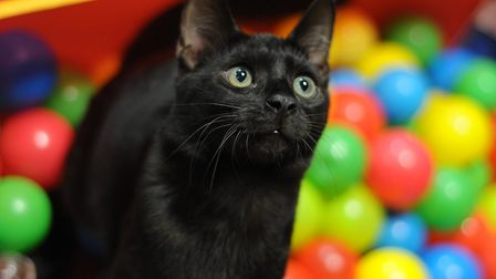 Pop down to Catastrophe Cat Cafe this Sunday. Picture: ANDY ABBOTT