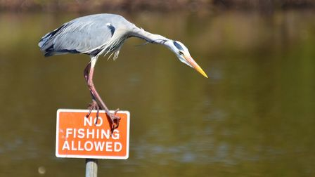 Alan Leeks' No Fishing Allowed ,the competition's Comedy category winner.