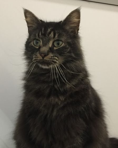 The beautiful Fluffy can't wait to find a new home