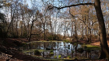 One of the Brecks' rare habitats - a pingo pool. Picture: NICK FORD