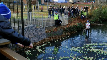 The St Nicholas Hospice Care duck race in the Abbey Gardens on the last day of the Christmas Fayre.