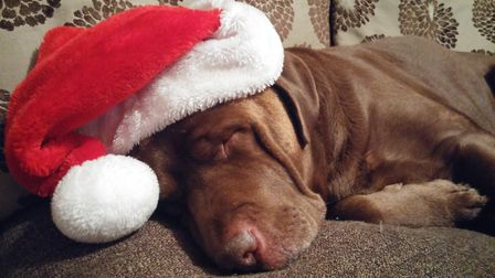 Charlie Boy the chocolate Labrador was an entrant in last year's contest. Picture: HANNAH KENT
