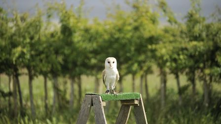 The animal lover in your life would love a Wildlife Trust membership. Picture: SU ANDERSON