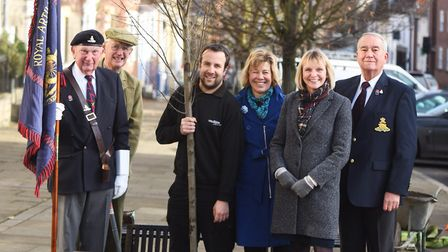 Tree planting on Angel Hill in Bury St Edmunds. Picture: GREGG BROWN