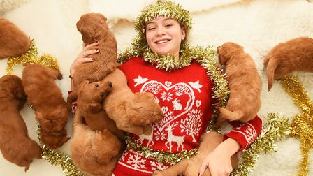 Immy Oliver-Beckett getting festive with the puppies. Picture: GREGG BROWN