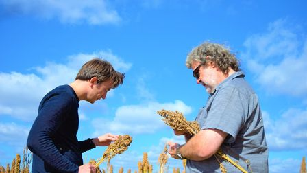Quinoa harvest, Scott Pattison of EDME and William Hudson of Hodmedod. Picture: RED FLAME COMMS