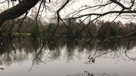 Tranquil scene of the lake at Valentines Park, close to where Monday's parkrun started. Picture: CAR