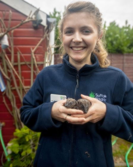 Ipswich hedgehog officer Ali North with two of her young friends. Picture: JOHN FERGUSON