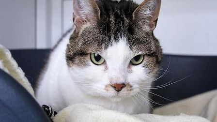 The affectionate Milly can't wait to find her new forever home
